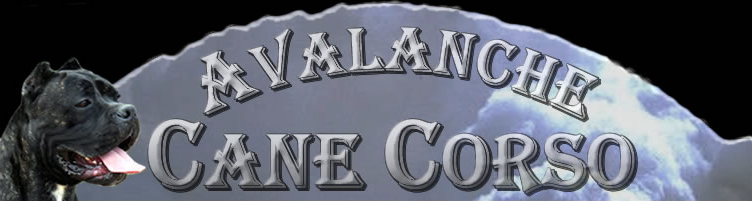 Avalanche Cane Corso Blog