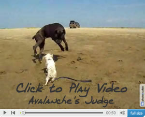 Click to Play Video Clip of Judge on the beach!
